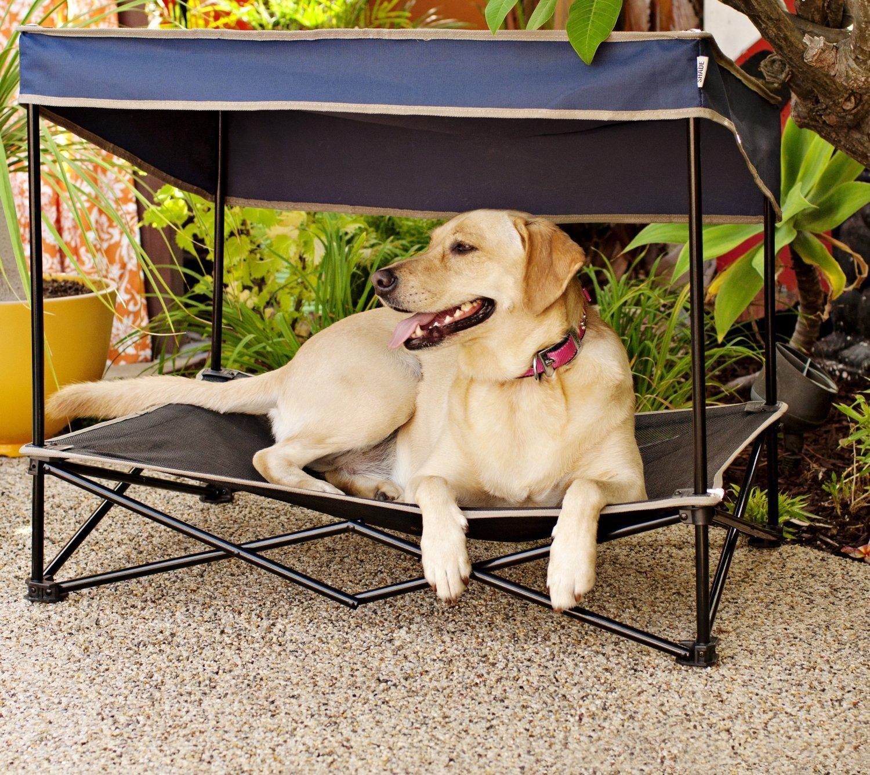 Brandine Pieghevoli Per Cani.Cane In Spiaggia Cosa Serve Portare Dogwelcome