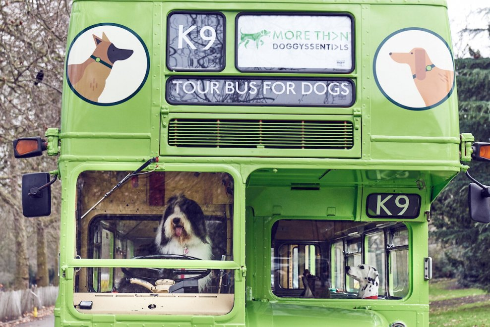City bus per i cani a Londra