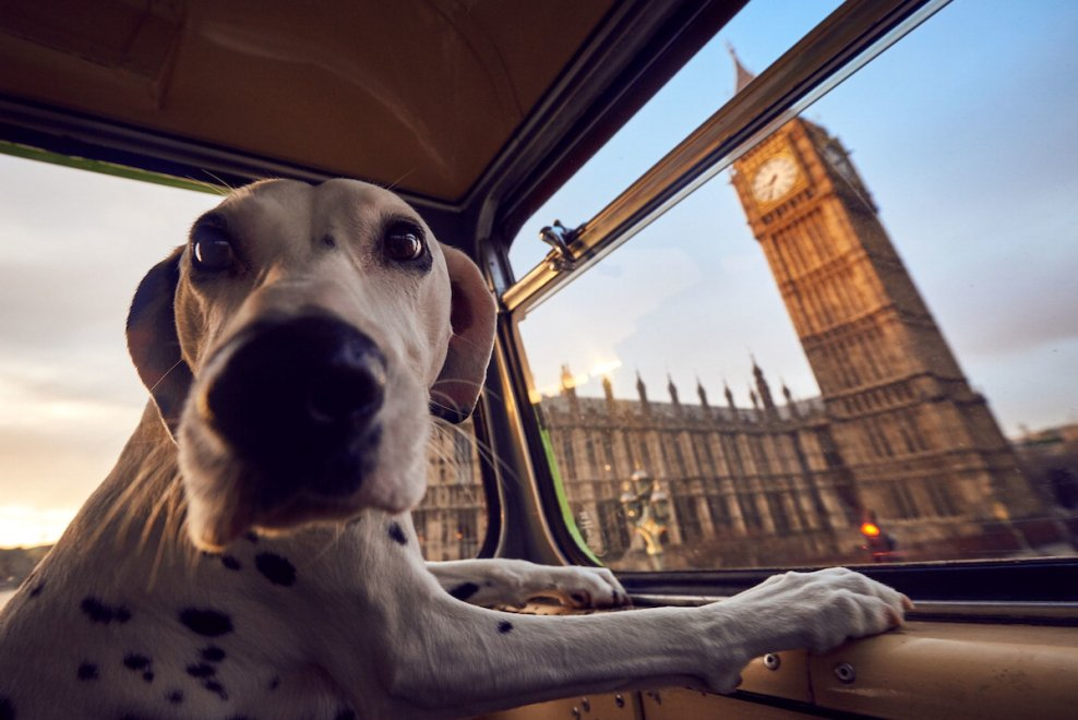 Tour a Londra in bus con il cane