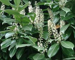 Le piante velenose o tossiche per cani e gatti dogwelcome for Piante velenose per i cani