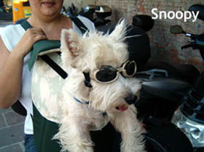 Snoopy, cane in scooter