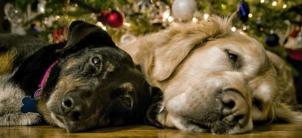 Foto Di Natale Con Cani.Vacanze Di Natale 2019 Con Cane O Gatto Dogwelcome La Bau