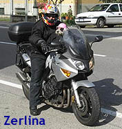 Zerlina, cane in moto