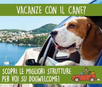 Le migliori strutture per le vacanze con il tuo cane!