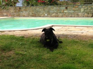 Con il cane in Toscana in vacanza Podere Ager Mentis dog friendly con piscina