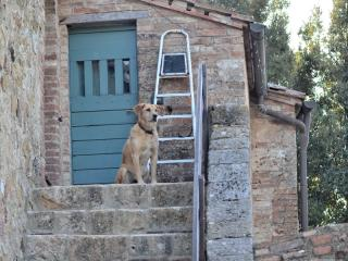 Animali ammessi in agriturismo in Toscana pet friendly - Podere Vignali