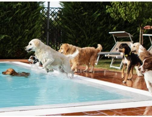 Hotel con piscina per cani dogwelcome hotel virginia rimini - Piscina per cani ...