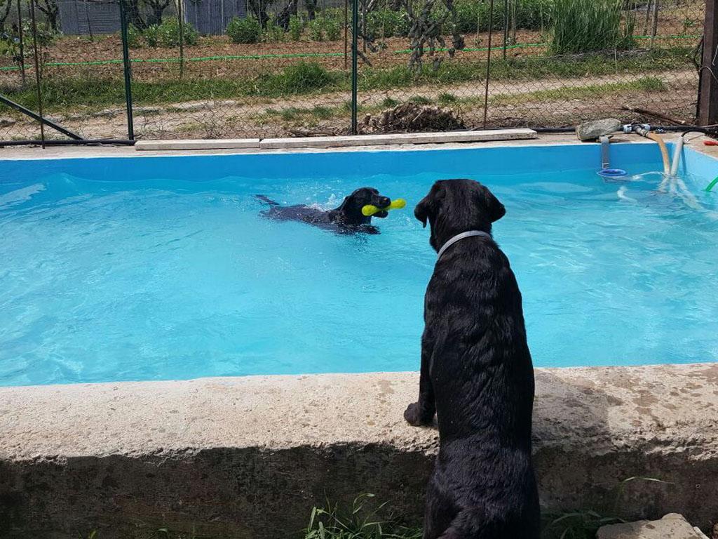 Agriturismo Con Piscina Per Cani Dogwelcome Fattoria