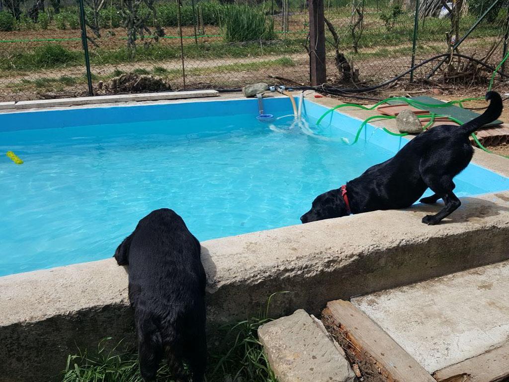 Agriturismo con piscina per cani dogwelcome fattoria gravanella toscana arezzo - Piscina per cani ...