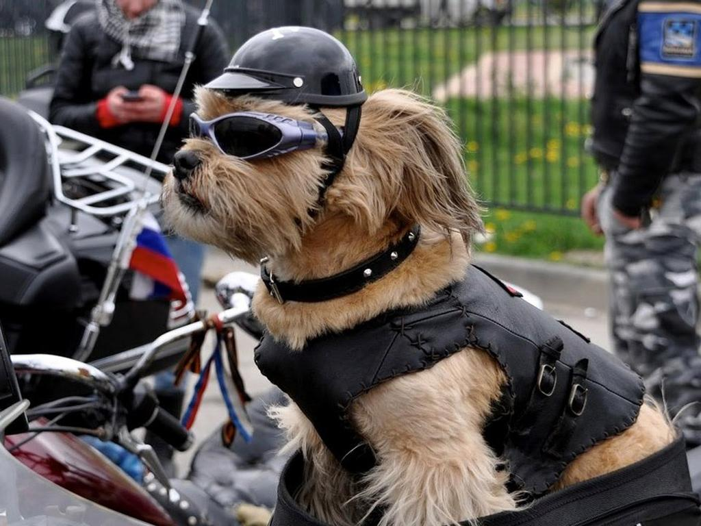 gros remise 100% authentifié plusieurs couleurs In moto e in scooter con il cane | Dogwelcome - Vacanze e ...