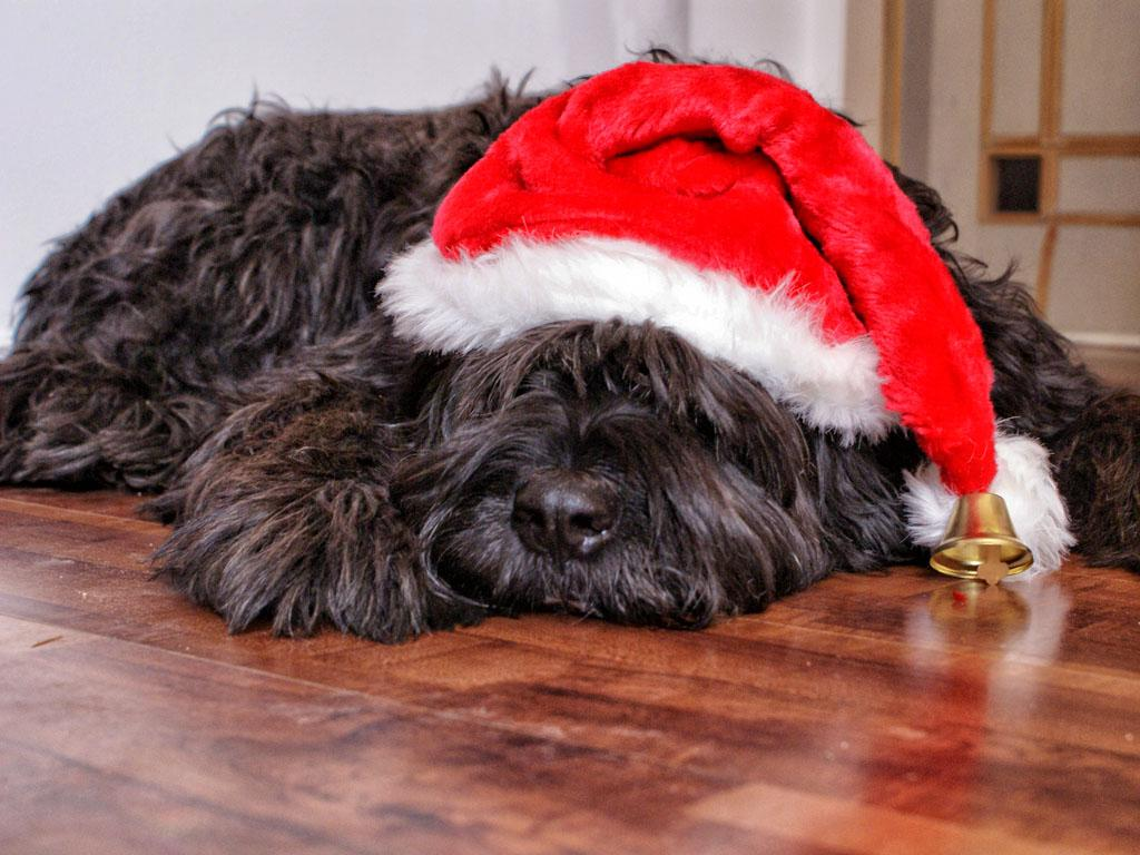 Immagini Natalizie Con Cani.Vacanze Di Natale 2019 Con Cane O Gatto Dogwelcome La Bau