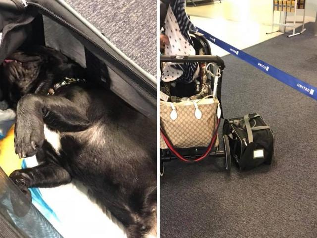 Cane deceduto in volo con United Airlines
