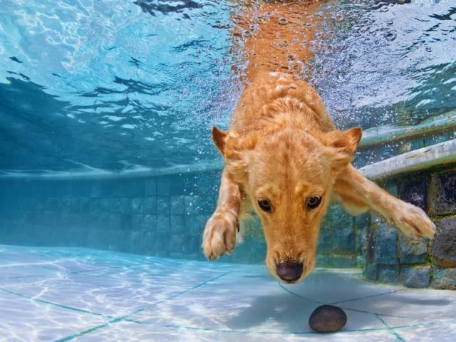 Vacanze e weekend in toscana con il cane dogwelcome - Piscina per cani ...