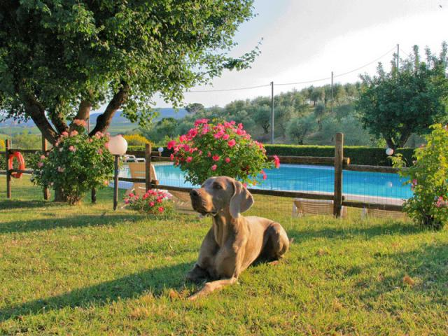 Toscana dog friendly vacanze in agriturismo con piscina - Agriturismo Metina