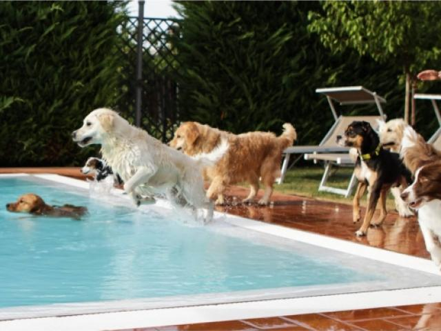 Hotel VIrginia pet friendly a Rimini vicino alle spiagge per cani