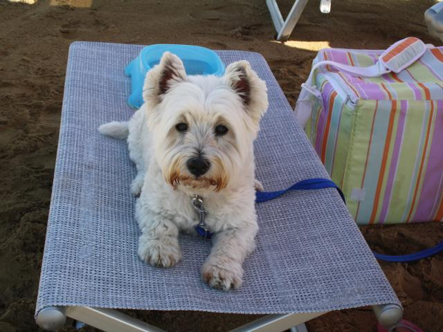 Dog friendly beach in LIgnano Riviera, Italy - La Spiaggia di Duke