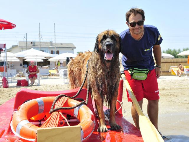 Spiaggia pet friendly cani ammessi Marche Fano - Animalido Dog Beach