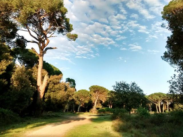 Parco San Rossore, cani ammessi - Daniele Napolitano [CC BY-SA 4.0 (https://creativecommons.org/licenses/by-sa/4.0)], from Wikimedia Commons