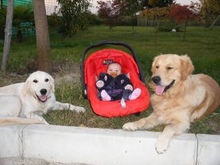 Arriva Un Bebè I Bimbi E Gli Animali In Casa Dogwelcome