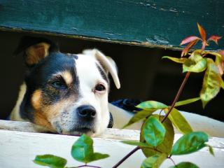 Piante Da Appartamento Tossiche Per I Gatti.Le Piante Velenose O Tossiche Per Cani E Gatti Dogwelcome