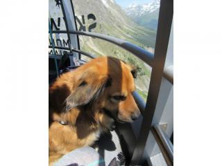 Skyway Monte Bianco cani ammessi
